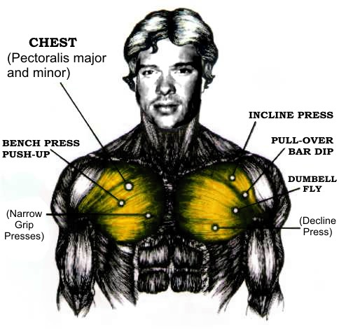 Good chest workouts for home or the gym.