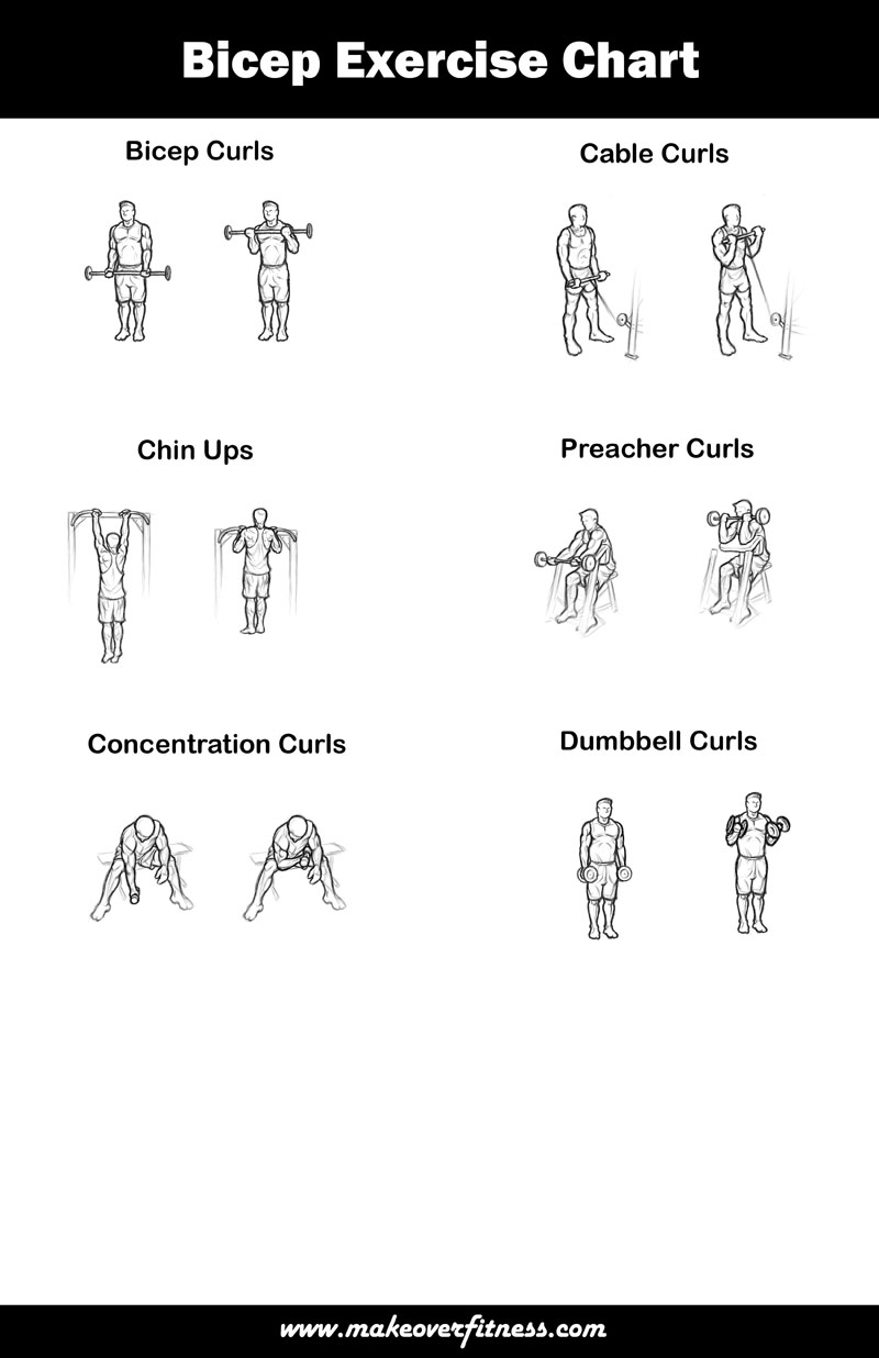 Bicep Workouts 4 Exercises For Bigger Better Biceps