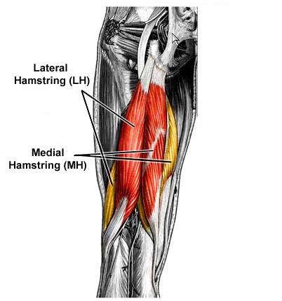 hamstring exercises Some Incredible Ideas From Fat Reduction 4 Idiots